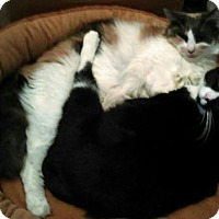 Adopt A Pet :: Joy and Rosy C/P - Absecon, NJ