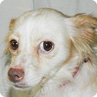 Adopt A Pet :: Elsa - Umatilla, FL