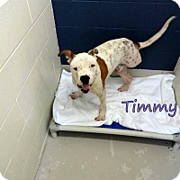 Adopt A Pet :: Timmy - Lakeville, MN