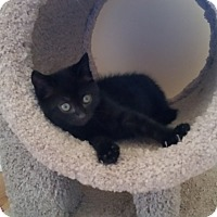 Adopt A Pet :: Elliot - Turnersville, NJ
