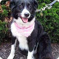 Adopt A Pet :: A037054 Rayna - Overland Park, KS