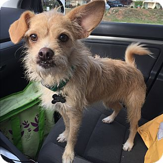 Terrier (Unknown Type, Small) Mix Dog for adoption in Norwalk, Connecticut - Winchester - MEET ME