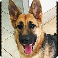 Adopt A Pet :: Bella Louise - Los Alamitos, CA