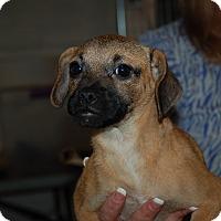 Adopt A Pet :: Bernadette - Lebanon, TN