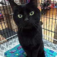 Adopt A Pet :: Jude the Magnificent Mush - Brooklyn, NY