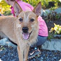 Adopt A Pet :: Tia - Whitehall, PA