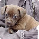 Adopt A Pet :: Noel (3 lb) Video!