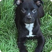 Adopt A Pet :: Ezra - McKinney, TX