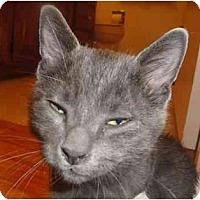 Adopt A Pet :: Lovebug - Irvine, CA