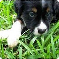 Adopt A Pet :: Danny - Orlando, FL