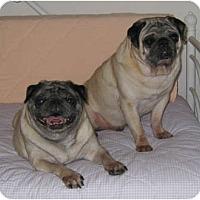 Adopt A Pet :: Pixie - Windermere, FL