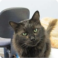 Adopt A Pet :: Mr. Muffin - Modesto, CA