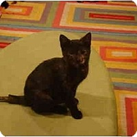 Adopt A Pet :: Pebbles--PETSMART - Muncie, IN