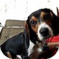 Adopt A Pet :: Pelle - Novi, MI