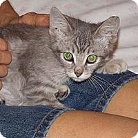 Adopt A Pet :: Tiffany - Scottsdale, AZ