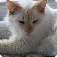 Adopt A Pet :: Finn - Monroe, GA