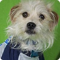 Adopt A Pet :: Tucker - Minneapolis, MN