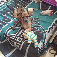 Adopt A Pet :: Gia - Flemington, NJ