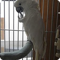 Adopt A Pet :: Angel - Denver, CO