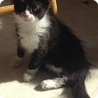 Adopt A Pet :: Jocko - Covington, KY