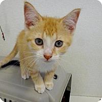 Adopt A Pet :: Copper - Belleville, MI