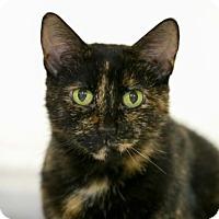 Adopt A Pet :: Jasmine - Kettering, OH