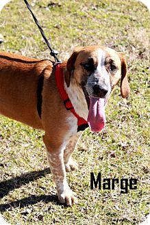 Labrador Retriever/Basset Hound Mix Dog for adoption in Arkadelphia, Arkansas - Marge