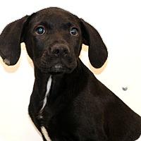 Adopt A Pet :: Action Jackson - Glastonbury, CT