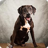 "Adopt A Pet :: Moose ""Fully Sponsored"" - Ottawa, KS"