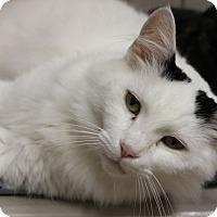 Adopt A Pet :: Chester - Medina, OH