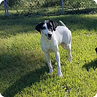 Adopt A Pet :: Oreo - Hammond, LA