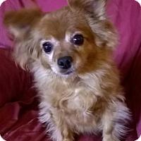 Adopt A Pet :: Bixby - Campbell, CA