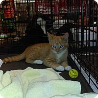 Adopt A Pet :: PM - Lancaster, CA
