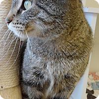 Adopt A Pet :: Lilianna - Cloquet, MN