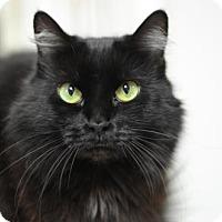 Adopt A Pet :: Puffy Mama 12263 - Atlanta, GA