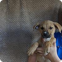 Adopt A Pet :: Zan - Oviedo, FL