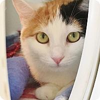 Adopt A Pet :: Linguine - Salisbury, MA