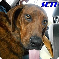 Adopt A Pet :: Seth - Harrisburgh, PA