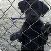 Adopt A Pet :: Onyx - Niceville, FL