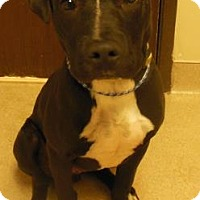 Adopt A Pet :: Robby - Gary, IN
