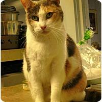 Adopt A Pet :: Noel - Milford, MA