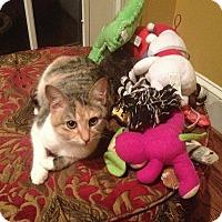 Adopt A Pet :: Elsa - Waxhaw, NC