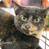 Adopt A Pet :: Cambria - Merrifield, VA