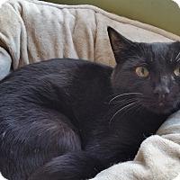 Adopt A Pet :: Tiny - Duluth, GA