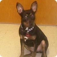 Adopt A Pet :: Susie - Darien, GA
