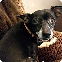 Adopt A Pet :: Mongo - Dayton, OH