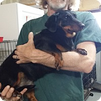 Adopt A Pet :: Maggie - Lubbock, TX