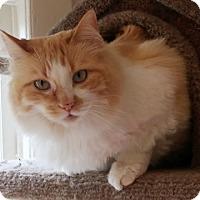 Adopt A Pet :: Bella - Anacortes, WA