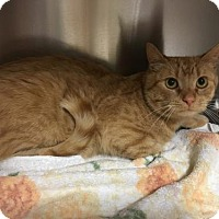 Adopt A Pet :: Mr. Jones - Herndon, VA