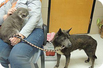 German Shepherd Dog Mix Dog for adoption in Richburg, South Carolina - Grayson